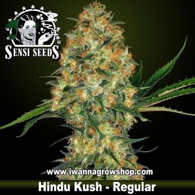 Hindu Kush – Regular