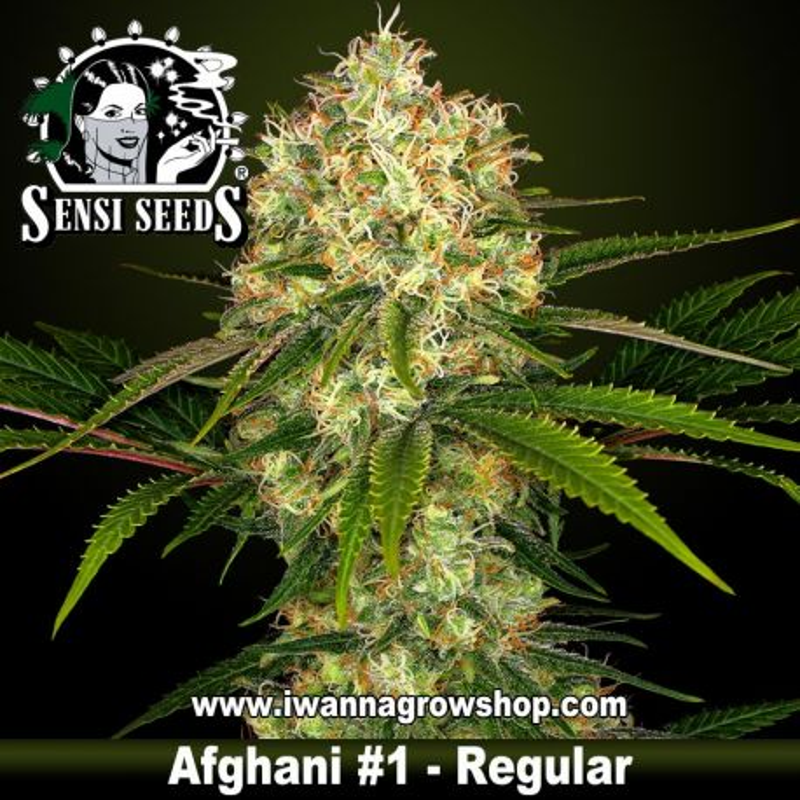 Afgani 1 Regular
