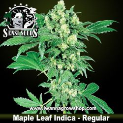Maple Leaf Indica – Regular