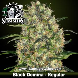 Black Domina – Regular