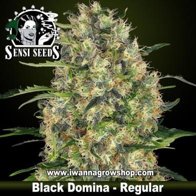 Black Domina – Regular