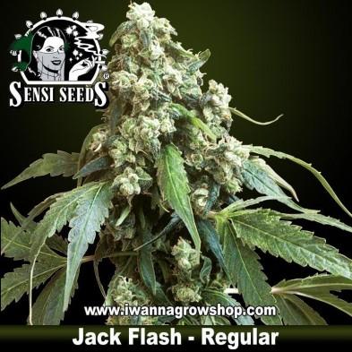 Jack Flash – Regular
