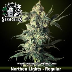 Northern Lights – Regular