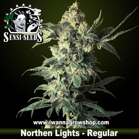 Northern Lights Regular