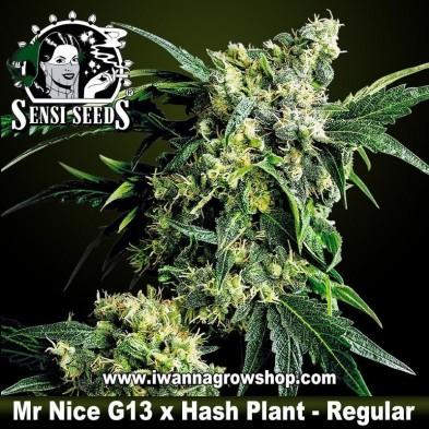 Mr. Nice G13 x Hash Plant – Regular