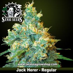 Jack Herer – Regular