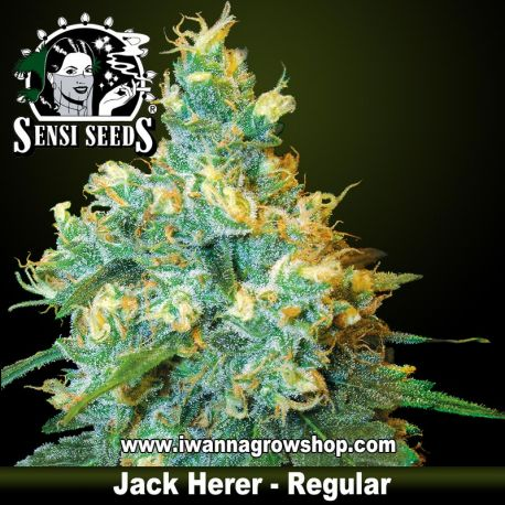 Jack Herer Regular