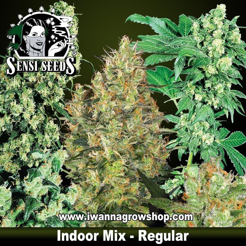 Indoor Mix Regulares