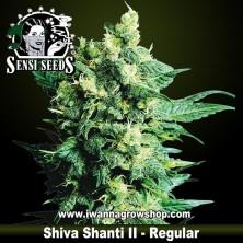 Shiva Shanti II – Regular