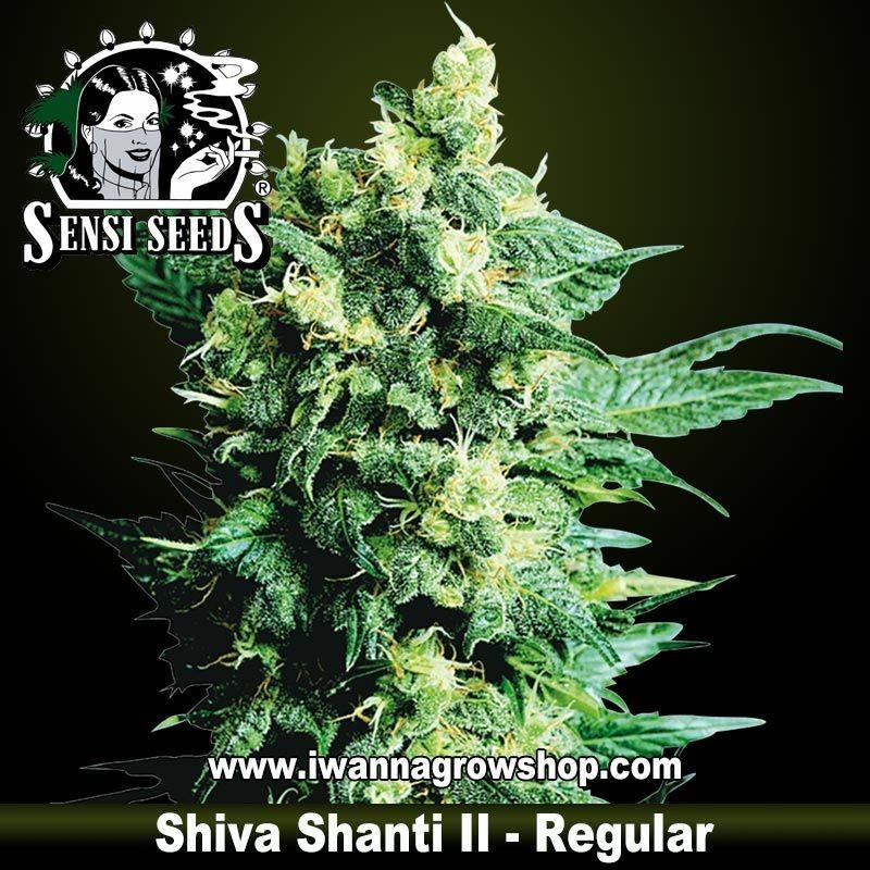 Shiva Shanti II regular