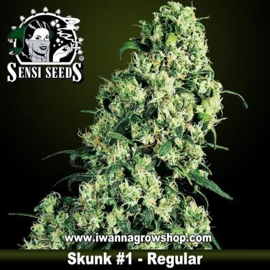 Skunk 1 – Regular