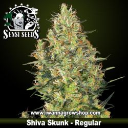 Shiva Skunk – Regular