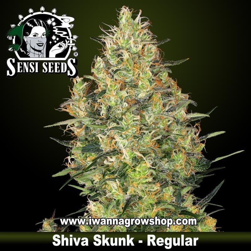 Shiva Skunk regular