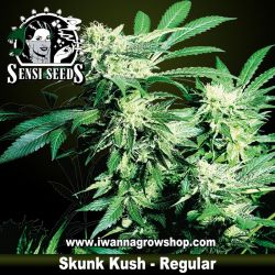 Skunk Kush – Regular