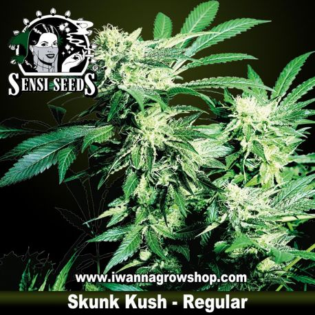 Skunk Kush Regular