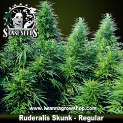 Ruderalis Skunk – Regular