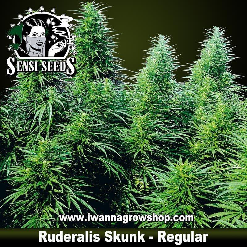 Rudelaris Skunk Regular