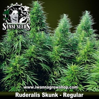 Ruderalis Skunk – Regular