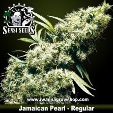 Jamaican Pearl – Regular
