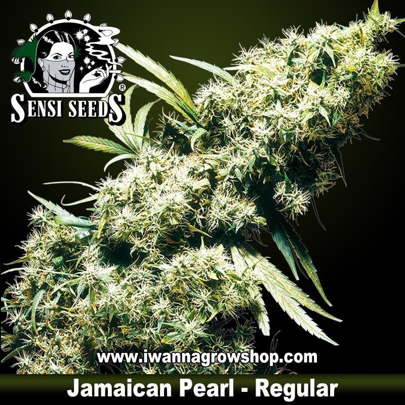 Jamaican Pearl Regular