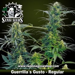 Guerrilla's Gusto – Regular