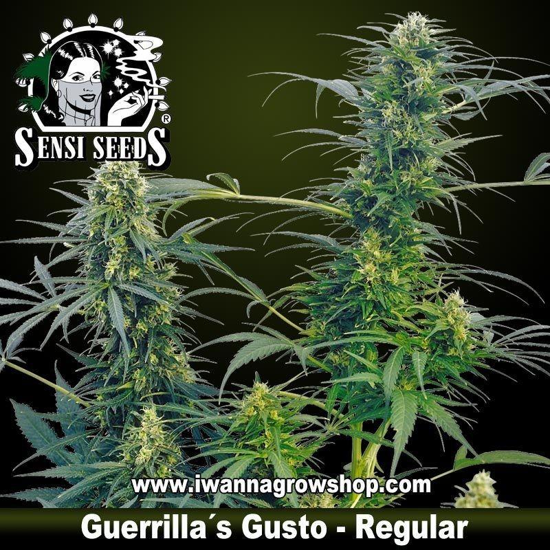 Guerrilla's Gusto Regular