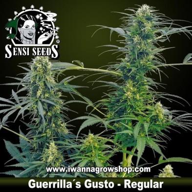 Guerrilla's Gusto – Regular