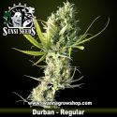 Durban – Regular