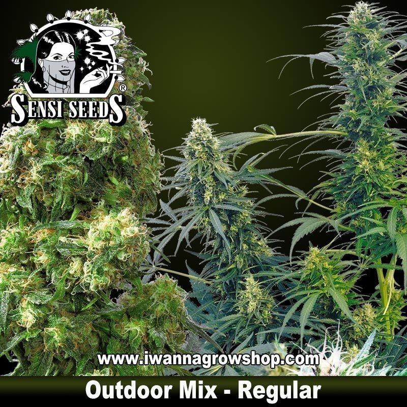 Outdoor Mix Regulares
