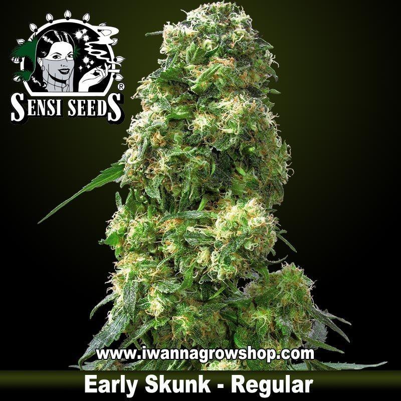 Early Skunk Regular