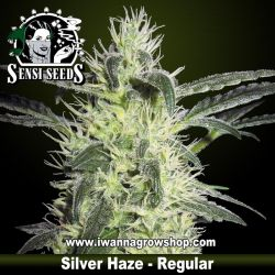 Silver Haze – Regular
