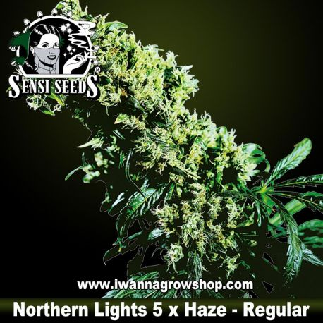 Northern Lights 5 x Haze regular