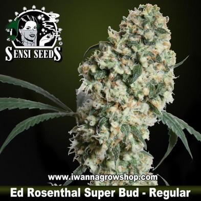 Ed Rosenthal Super Bud – Regular