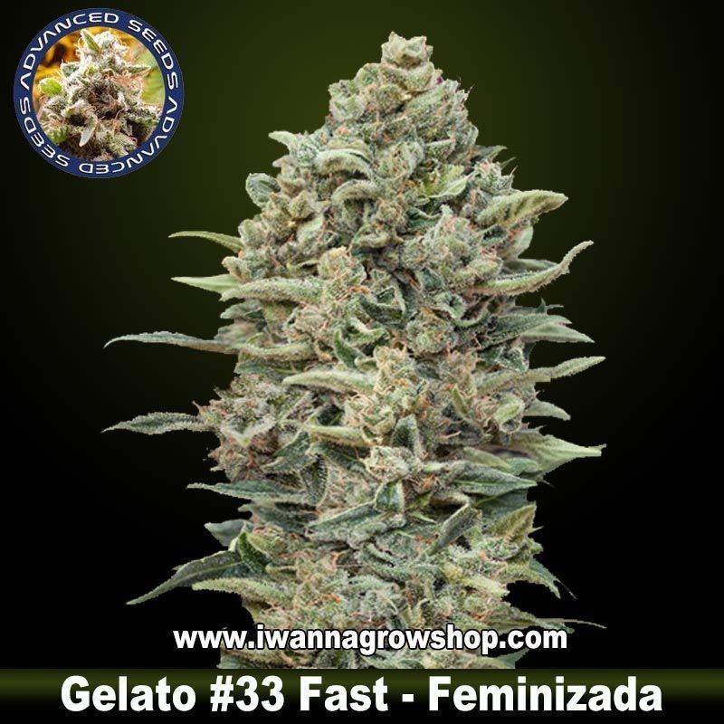Gelato 33 Fast