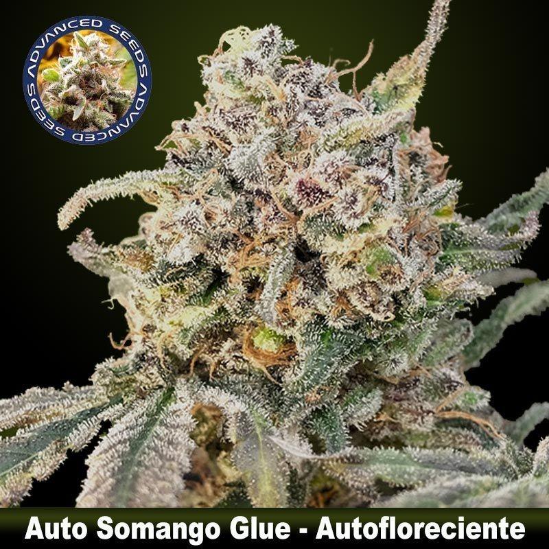 Auto Somango Glue