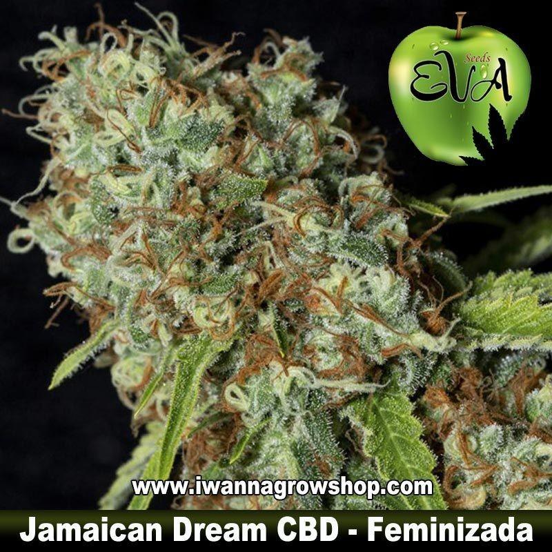 Jamaican Dream CBD