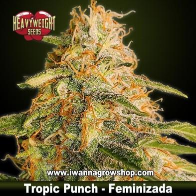 Tropic Punch