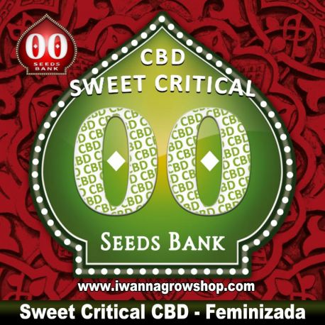 Sweet Critical CBD