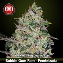 Bubble Gum Fast