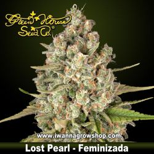 Lost Pearl