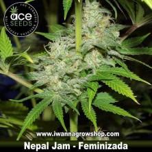 Nepal Jam