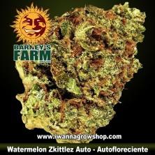 Watermelon Zkittlez Auto
