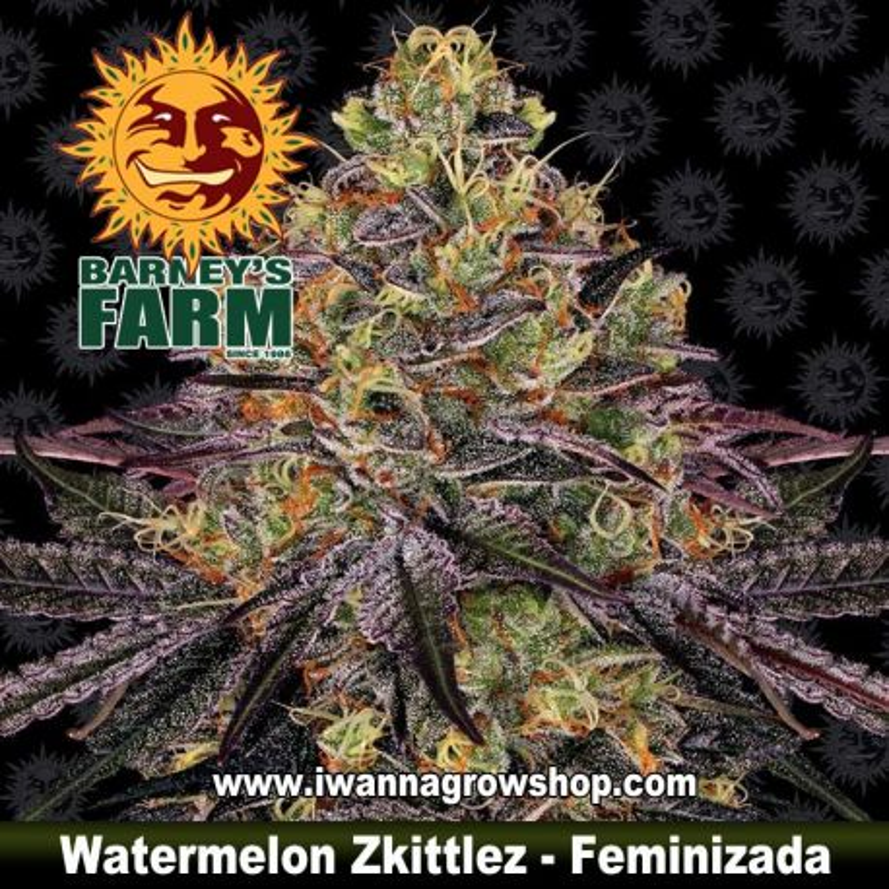 Watermelon Zkittlez