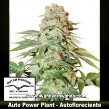 Auto Power Plant