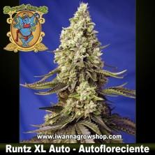 Runtz XL Auto