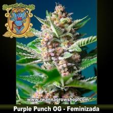 Purple Punch OG