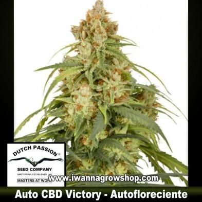 Auto CBD Victory