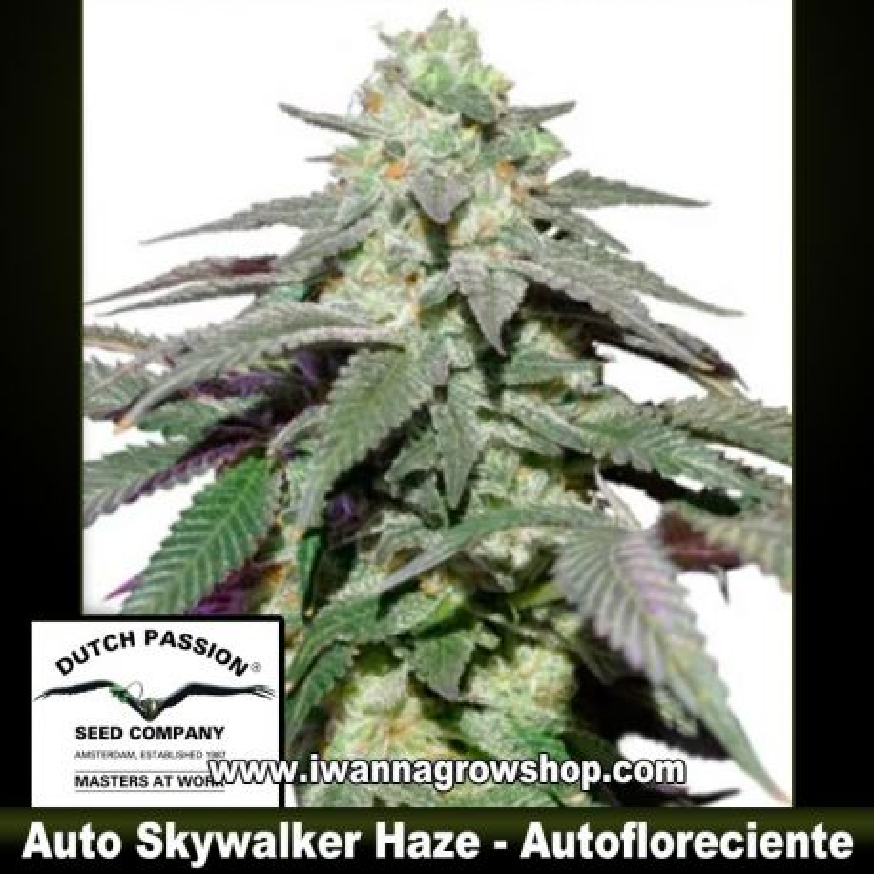 Auto Skywalker Haze