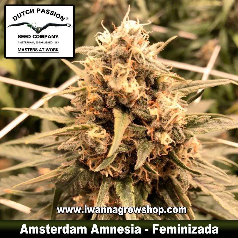 Amsterdam Amnesia