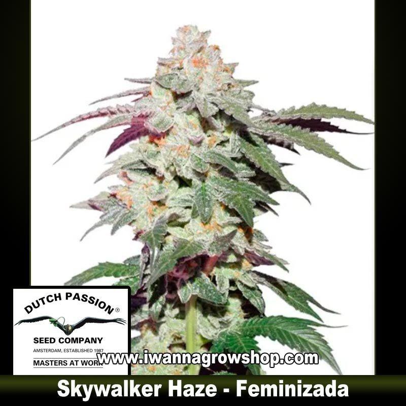 Skywalker Haze
